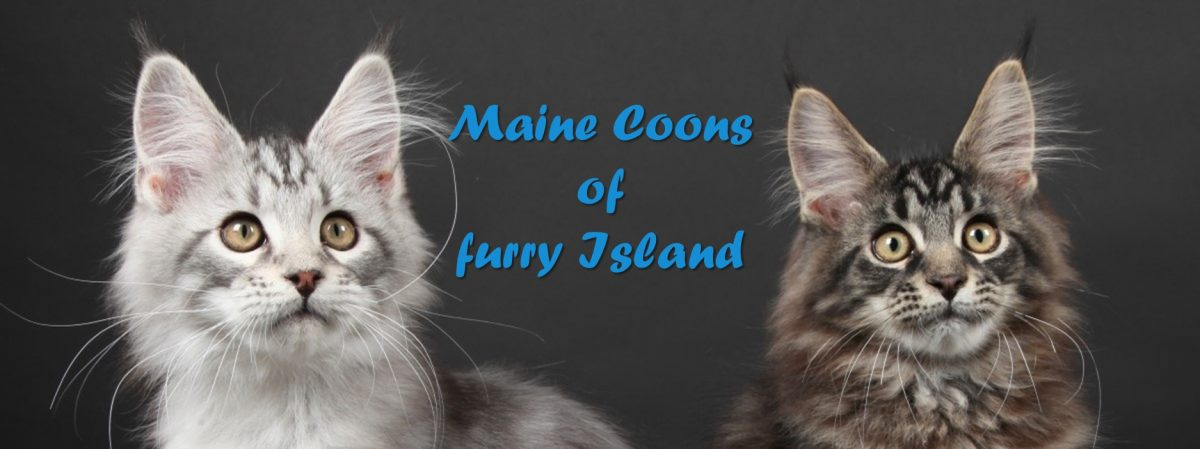 Maine Coons of furry Island